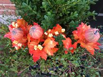 南瓜和叶子n万圣夜心情 图库摄影