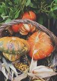 南瓜和玉米在篮子 免版税库存图片