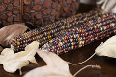 南瓜和玉米感恩装饰的 库存图片