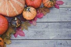南瓜和秋叶在木背景 秋天查出的南瓜白色 免版税库存图片
