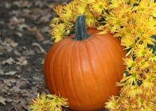 南瓜和秋天花 库存图片