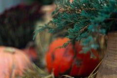 南瓜和秸杆在绿色金钟柏附近在石墙前面 装饰万圣节 免版税图库摄影