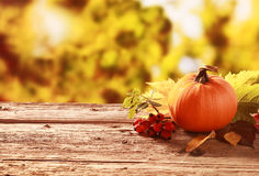 南瓜和红色野玫瑰果在秋天从事园艺 免版税库存照片