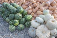 南瓜和西瓜、秋季收获,小南瓜、纹理或者秋天背景 免版税库存照片