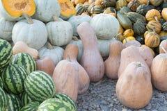 南瓜和西瓜、秋季收获,小南瓜、纹理或者秋天背景 库存图片