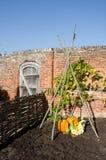 南瓜和金瓜在英国庭院之外 库存照片