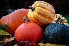 南瓜和金瓜,一种五颜六色的季节性选择 免版税图库摄影