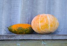 南瓜和黄色南瓜在一个长木凳 conce 免版税库存照片
