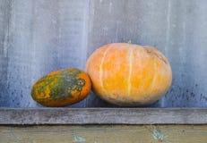 南瓜和黄色南瓜在一个长木凳 conce 免版税库存图片