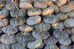 南瓜在农业市场上 免版税库存照片