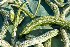 南瓜在秋天 图库摄影