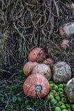 南瓜堆和绿色苹果用玉米烘干秸杆 免版税库存照片