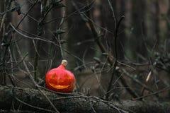 南瓜灯笼在一个杉木森林里在秋天 库存图片
