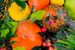 南瓜的不同的分类在背景五颜六色的叶子的 秋天收获 免版税库存照片