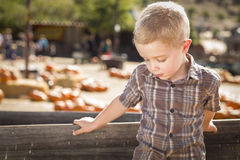 南瓜站立反对木无盖货车的补丁农场的哀伤的男孩 图库摄影