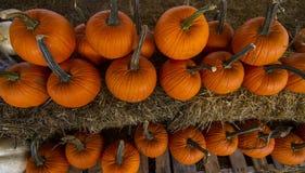 南瓜补丁准备好在秋季 库存图片
