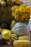 南瓜补丁准备好在秋季 免版税库存照片
