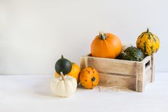 南瓜装饰的万圣节,五颜六色的装饰南瓜,金瓜,秋天,收获,当拷贝空间留出 免版税库存图片