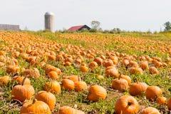 南瓜领域在国家农场,秋天风景 免版税库存照片