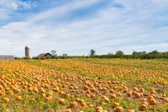 南瓜领域在国家农场,秋天风景 免版税图库摄影