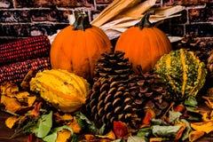南瓜Pinecones玉米和金瓜秋天静物画 库存照片