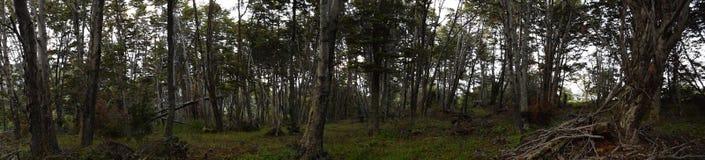 南的世界的森林 库存图片