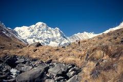 南的Annapurna,喜马拉雅山,尼泊尔 图库摄影