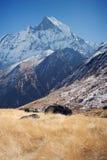 南的Annapurna,喜马拉雅山,尼泊尔 免版税库存图片