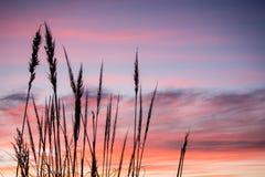 南美大草原的喷粉器 免版税库存照片