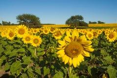 南美大草原风景, 库存图片