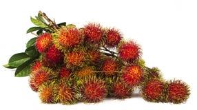 南美异乎寻常的frut 免版税库存图片