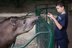 南美貘貘类动物terrestris 库存图片