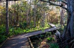 南部的佛罗里达森林步行 免版税库存照片