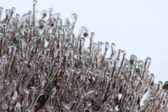 南部的冷冻 库存图片