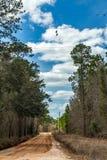 南部的土路 免版税库存图片