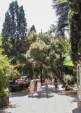 南部的城市的植被 库存图片
