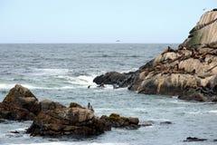 南部的海狮群在比尼亚德尔马 图库摄影