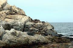 南部的海狮群在比尼亚德尔马 免版税库存图片