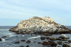 南部的海狮群在比尼亚德尔马 免版税库存照片