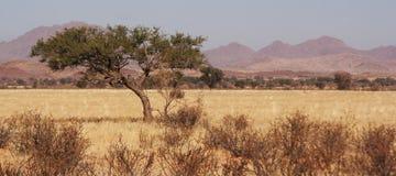 南部的纳米比亚风景 免版税库存照片