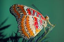 南部的花彩蝴蝶 免版税库存照片