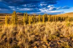 南部非洲的干旱台地高原草原 免版税库存照片