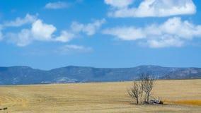 南非庭院大道 免版税图库摄影