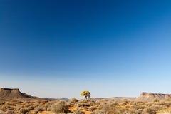南非洲干燥的横向 库存图片