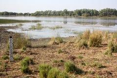 南非洲横向madikwe的自然储备 免版税图库摄影