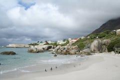 南非洲的企鹅 库存图片