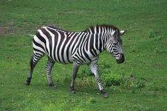 南非洲的徒步旅行队 库存照片