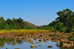 南非洲的河床 图库摄影