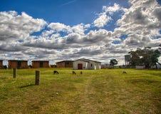 南非的东开普省的风景 免版税图库摄影