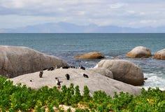南非,西开普省,开普敦半岛 图库摄影